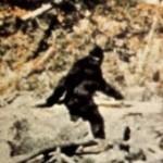 Patterson bigfoot SOURCE Public Domain