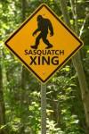 Sasquatch Crossing
