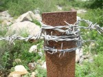 barbed-wire CREDIT Marina Shemesh SOURCE publicdomainpictures.net
