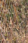 chain fence SOURCE pixabay.com public domain