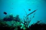 coral-reef-underwarer-photo SOURCE Public Domain