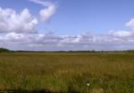 Everglades_Sawgrass_Prairie_CREDIT Moni3 SOURCE Wikipedia (Public Domain)