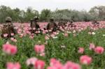 USNATO-poppies2 SOURCE Washingtonsblog.com Public Domain