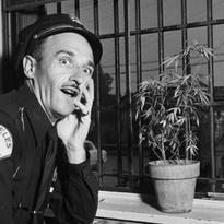 square-1951-marijuanacop-thumb-205x205